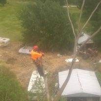 An arborist standing on top a half cut down tree